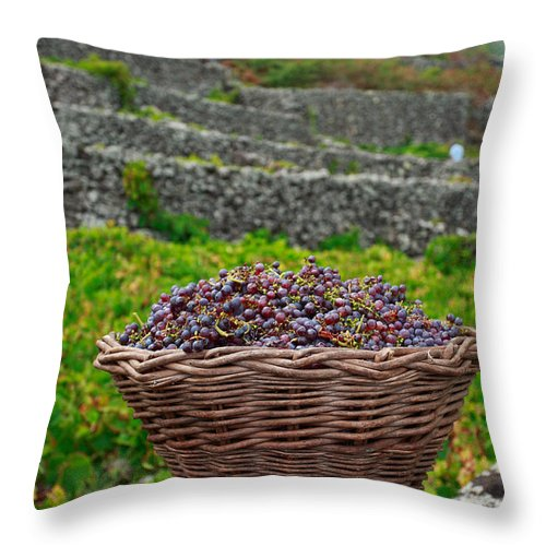Basket Throw Pillow featuring the photograph Grape Harvest by Gaspar Avila