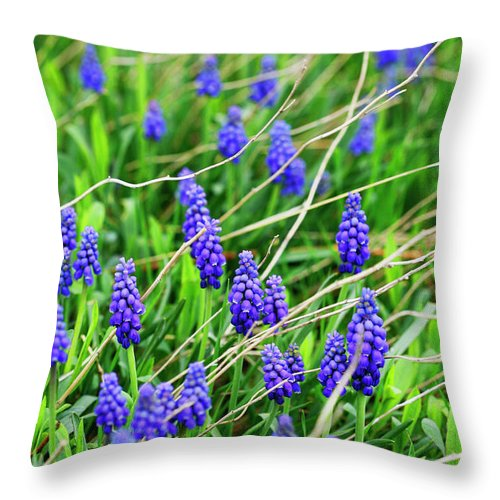 Grape Throw Pillow featuring the photograph Grape Hyacinth by Marilyn Hunt
