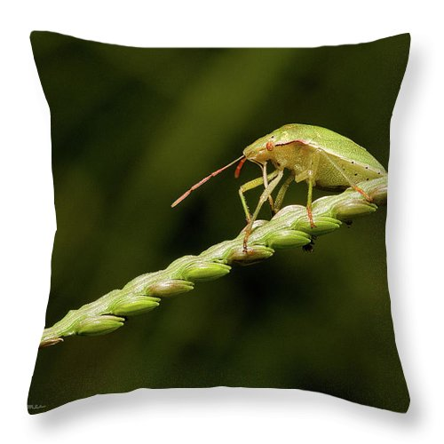 Bug Throw Pillow featuring the photograph Grass Bridge by Christopher Holmes