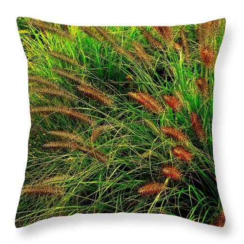 Grass Throw Pillow featuring the photograph Grasses In The Verticle by Ian MacDonald