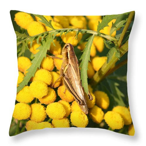 Bug Grasshopper Plants Flowers Nature Yellow Wild Life Green Weed Throw Pillow featuring the photograph Grasshopper by Andrea Lawrence