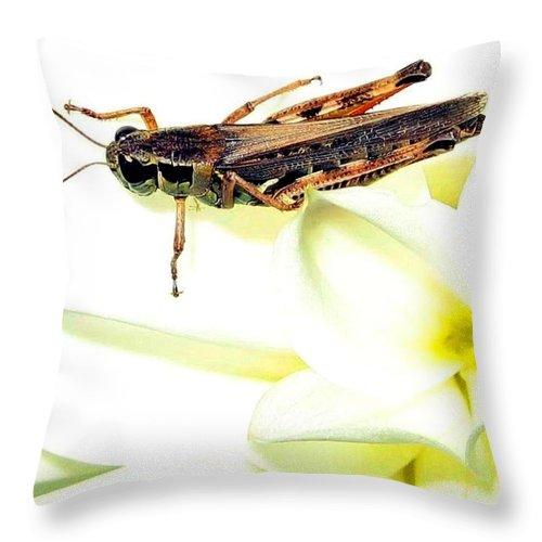 Grasshopper Throw Pillow featuring the photograph Grasshopper by Will Borden