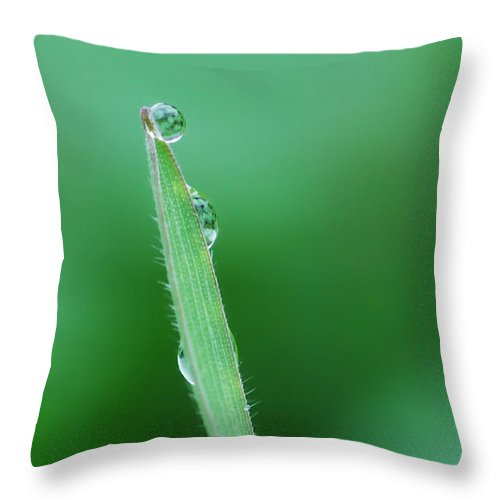 Grass Throw Pillow featuring the photograph Gravity Defied by Donna Blackhall