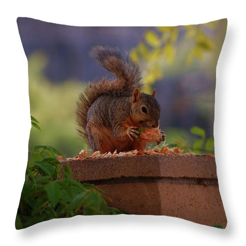 Rmb2010072600031 Throw Pillow featuring the photograph Munching Squirrel by Robert Braley