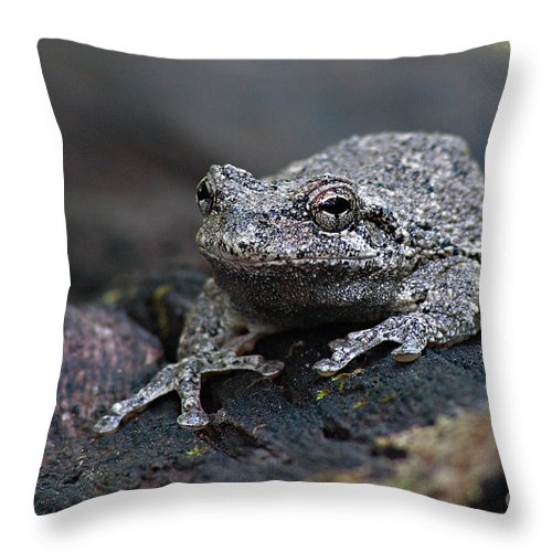 Frog Throw Pillow featuring the photograph Gray Treefrog On A Log by Max Allen