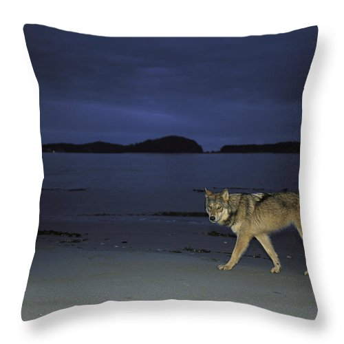 Pacific Ocean Throw Pillow featuring the photograph Gray Wolf On Beach At Twilight by Joel Sartore
