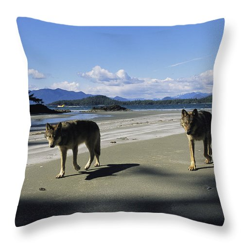 Pacific Ocean Throw Pillow featuring the photograph Gray Wolves On Beach by Joel Sartore