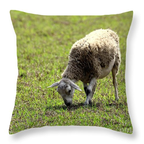 Nature Throw Pillow featuring the photograph Grazing by Diann Fisher