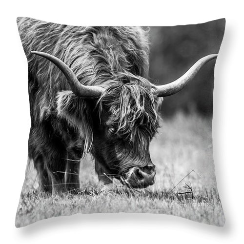 Highland Cows Throw Pillow featuring the photograph Grazing by Katrina Martlew
