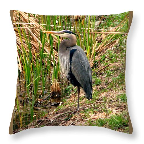 Bird Throw Pillow featuring the photograph Great Blue Heron 2 by J M Farris Photography