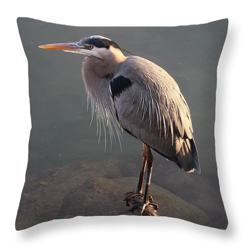 Great Throw Pillow featuring the photograph Great Blue Heron - 5 by Christy Pooschke