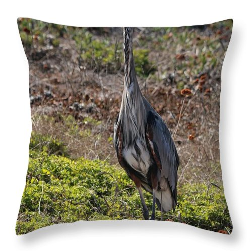 Great Blue Heron Throw Pillow featuring the photograph Great Blue Heron - 7 by Christy Pooschke