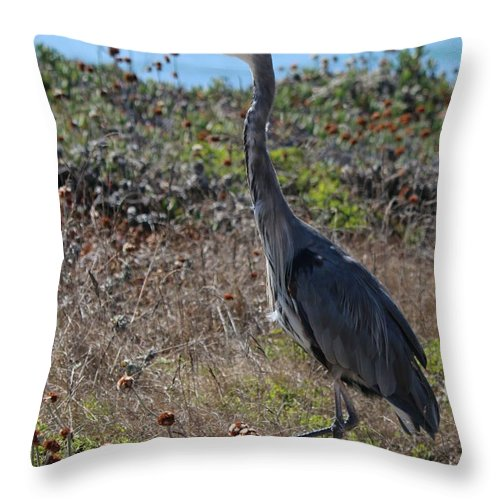 Great Blue Heron Throw Pillow featuring the photograph Great Blue Heron - 8 by Christy Pooschke