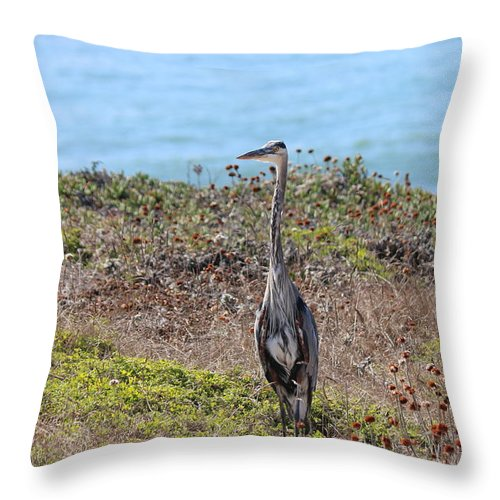 Great Blue Heron Throw Pillow featuring the photograph Great Blue Heron - 9 by Christy Pooschke