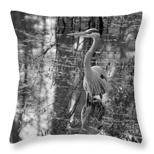 Great Blue Heron Throw Pillow featuring the photograph Great Blue Heron And Reflection-black And White by Suzanne Gaff