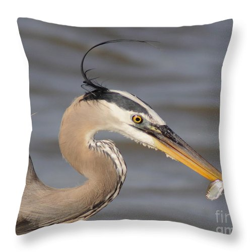 Animal Throw Pillow featuring the photograph Great Blue Heron Gets Twofer by Robert Frederick