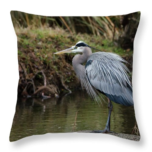 Hero Throw Pillow featuring the photograph Great Blue Heron On The Watch by George Randy Bass