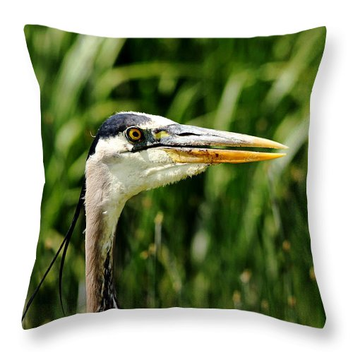 Heron Throw Pillow featuring the photograph Great Blue Heron Portrait by Debbie Oppermann