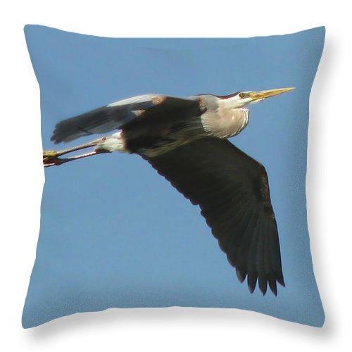 Nature Throw Pillow featuring the photograph Great Blue by Peg Urban