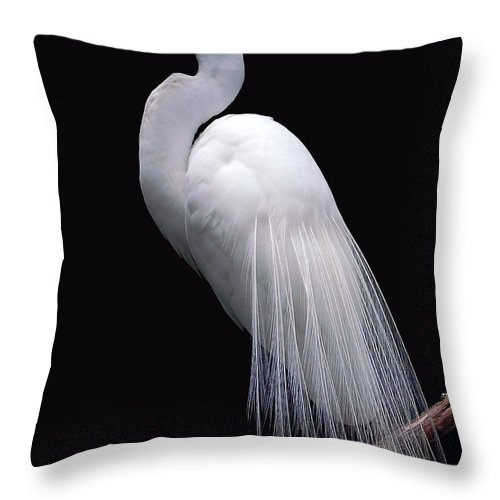 Egret Throw Pillow featuring the photograph Great Egret II by Donna Proctor