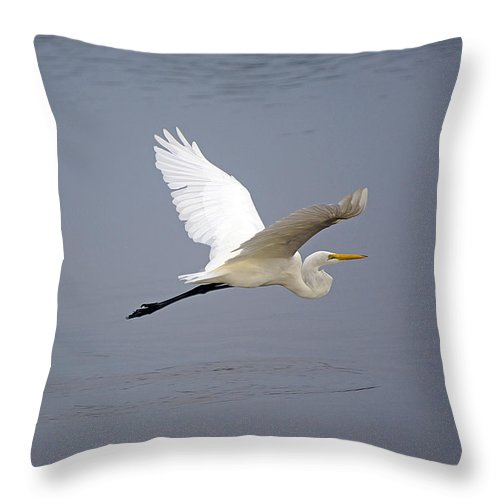 Egret Throw Pillow featuring the photograph Great Egret In Flight by Kenneth Albin