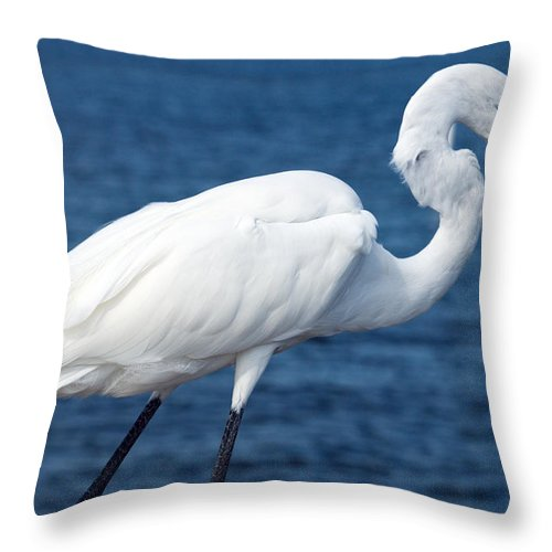 Great; Egret; Ardea; Alba; Eating; Eat; Fish; Redfish; Red; Bird; Seabird; Ocean; Indian; River; Lag Throw Pillow featuring the photograph Great Egret In Florida by Allan Hughes