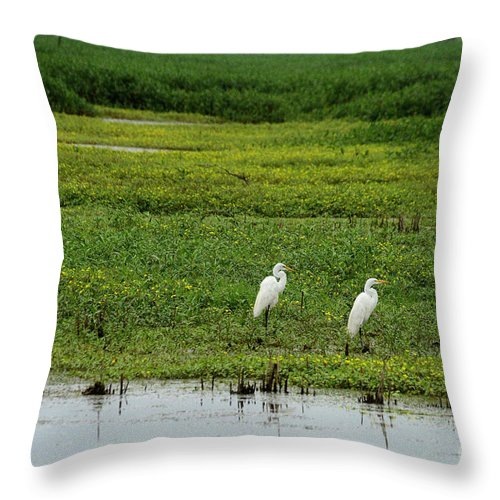 Bird Throw Pillow featuring the photograph Great Egrets by Charles Trinkle