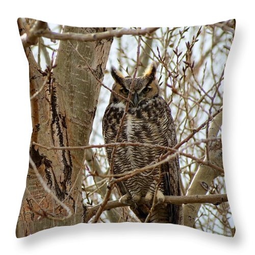 Owl Throw Pillow featuring the photograph Great Horned Owl by Connor Beekman