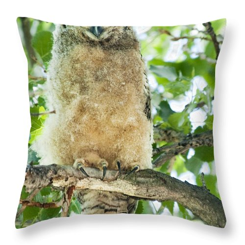 Owl Throw Pillow featuring the photograph Great Horned Owl by Gary Beeler