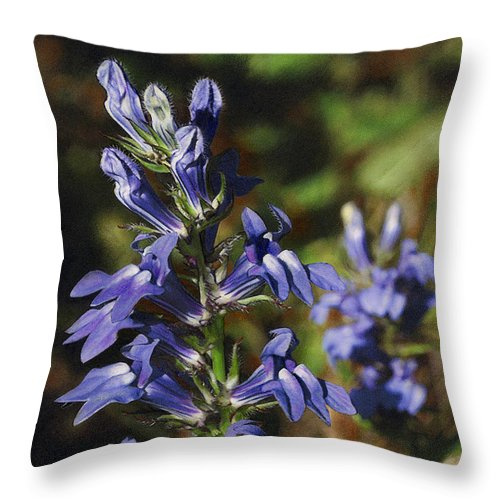 Wildflower Throw Pillow featuring the drawing Great Lobelia Blues by Bruce Morrison
