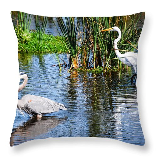Wildlife Throw Pillow featuring the photograph Great White And Great Blue by Rupert Chambers
