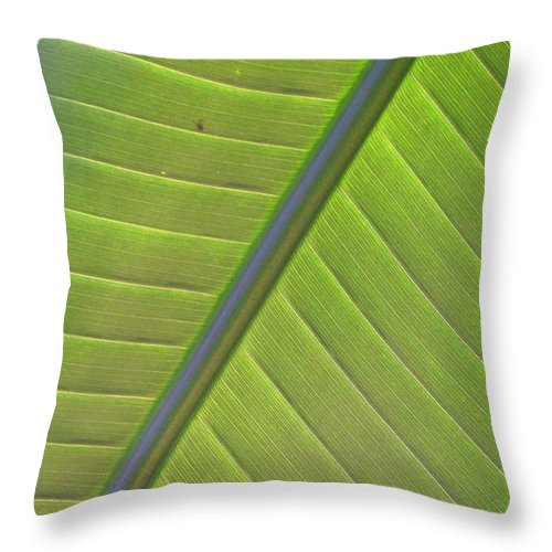 Leaf Throw Pillow featuring the photograph Green And Purple Pattern by Laurie Paci