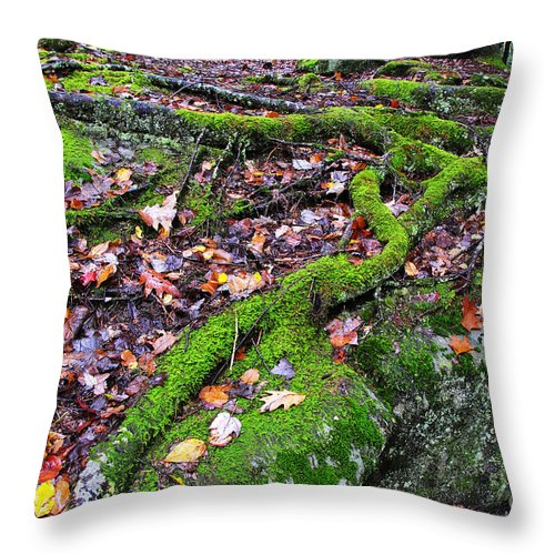 Tree Roots Throw Pillow featuring the photograph Green And Serene by Thomas R Fletcher