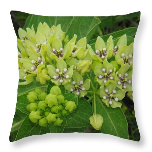 Wildflower Throw Pillow featuring the photograph Green Antelope Horns by Robyn Stacey