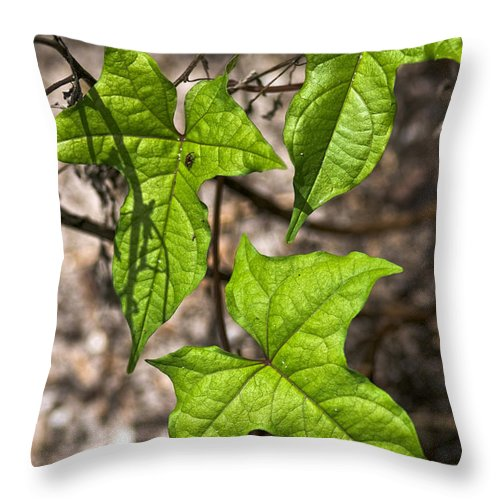Green Throw Pillow featuring the photograph Green Arrowheads by Christopher Holmes