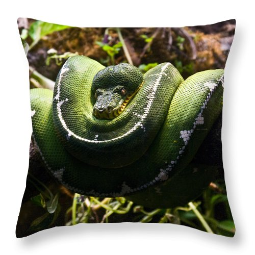 Green Throw Pillow featuring the photograph Green Boa by Douglas Barnett