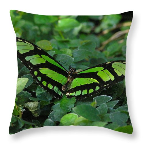Green Throw Pillow featuring the photograph Green Butterfly by Louise Magno