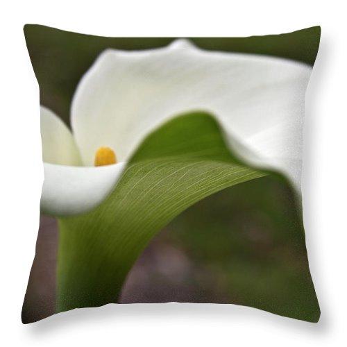 Calla Throw Pillow featuring the photograph Green Calla by Heiko Koehrer-Wagner