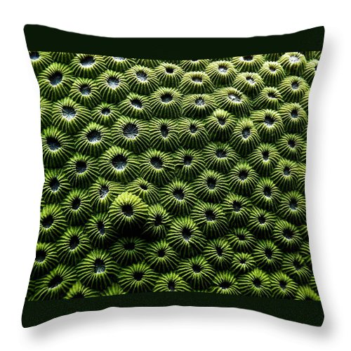 Coral Throw Pillow featuring the photograph Green Coral by Dragica Micki Fortuna