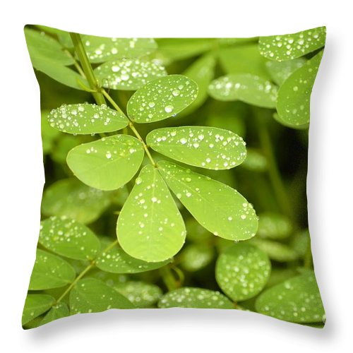 Green Throw Pillow featuring the photograph Green by David Lee Thompson
