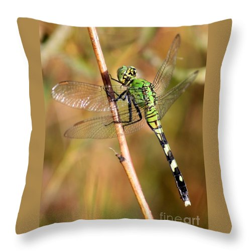 Dragonfly Throw Pillow featuring the photograph Green Dragonfly Closeup by Carol Groenen