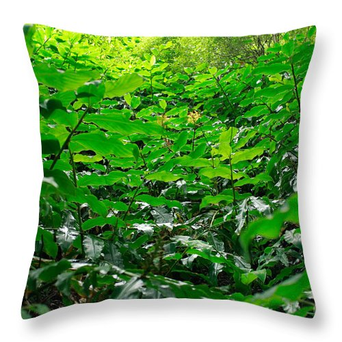 Deep Forest Throw Pillow featuring the photograph Green Foliage by Gaspar Avila