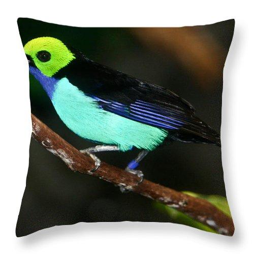 Green Throw Pillow featuring the photograph Green Headed Bird On Branch by Douglas Barnett