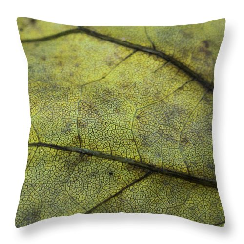 Nature Throw Pillow featuring the photograph Green Leaf by Linda Sannuti