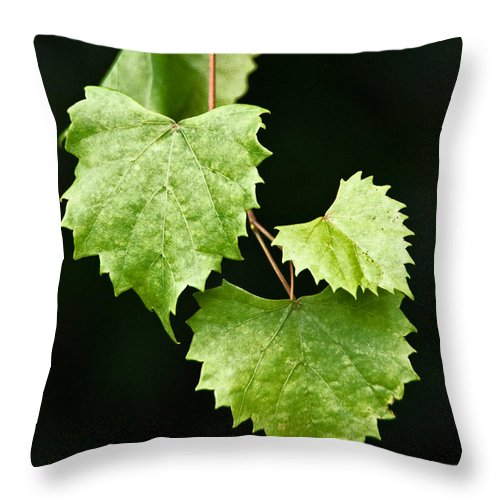 Flora Throw Pillow featuring the photograph Green Leaves by Christopher Holmes