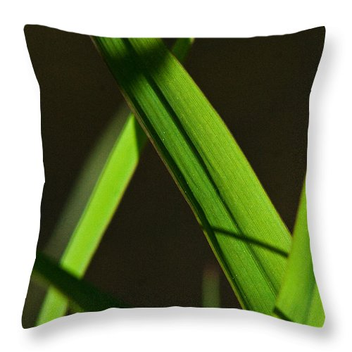Green Throw Pillow featuring the photograph Green Leaves In Sunlight by Martha Johnson
