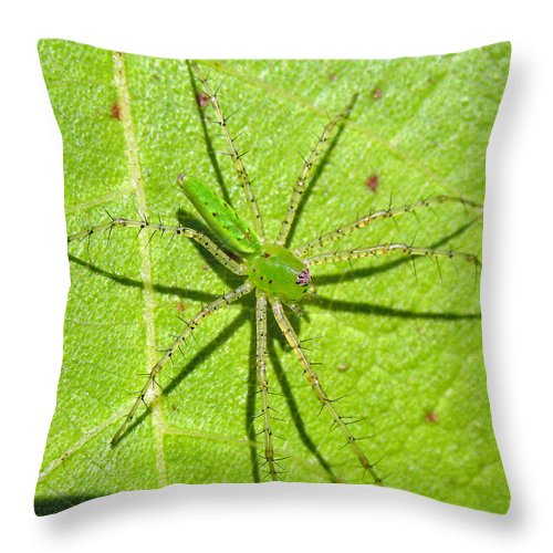 Spider Throw Pillow featuring the photograph Green Lynx Spider by Kenneth Albin