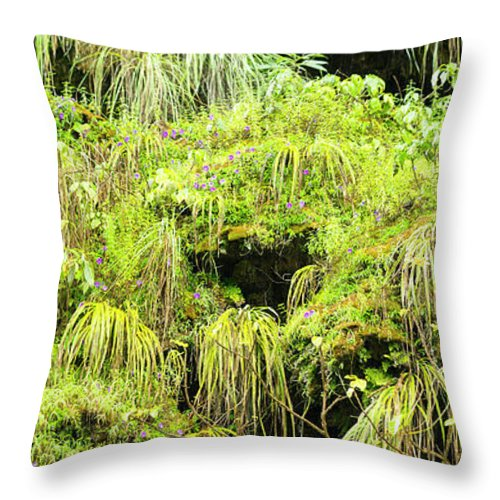 Green Throw Pillow featuring the photograph Green Moss A Detailed Background by Tim Hester