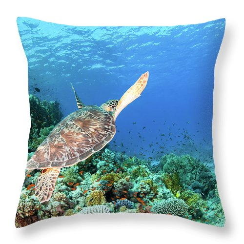 Green Throw Pillow featuring the photograph Green Sea Turtle by Hagai Nativ