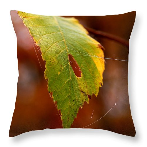 Leaves Throw Pillow featuring the photograph Green Silk by Linda McRae